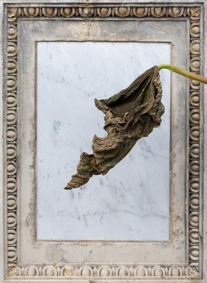 Empty gravestone, withered leaf royalty free stock image