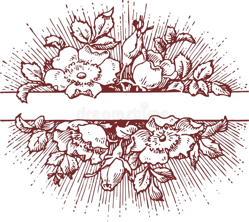 Ornamento ilustração do vetor