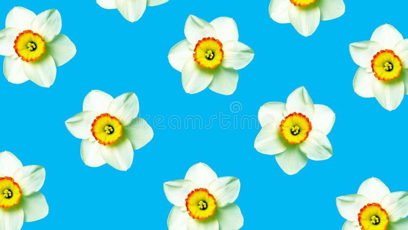Ornamento del narciso dei fiori sul blu Priorit? bassa floreale naturale Modello dei fiori della molla fotografia stock
