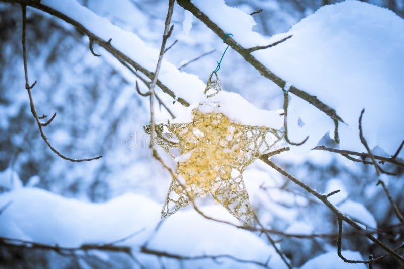 Ornamento di Natale della stella con la scintilla dell'oro che appende su un albero in una foresta, dopo le precipitazioni nevose fotografia stock libera da diritti