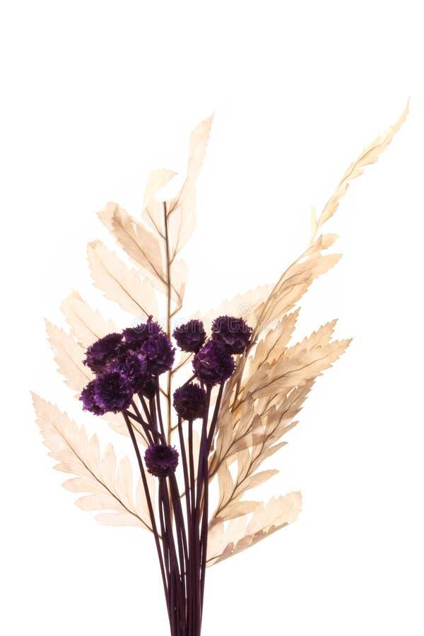 Ornamento micro de las flores imagenes de archivo