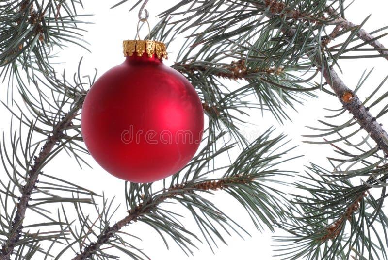 Ornamento rojo en el árbol de navidad imagenes de archivo