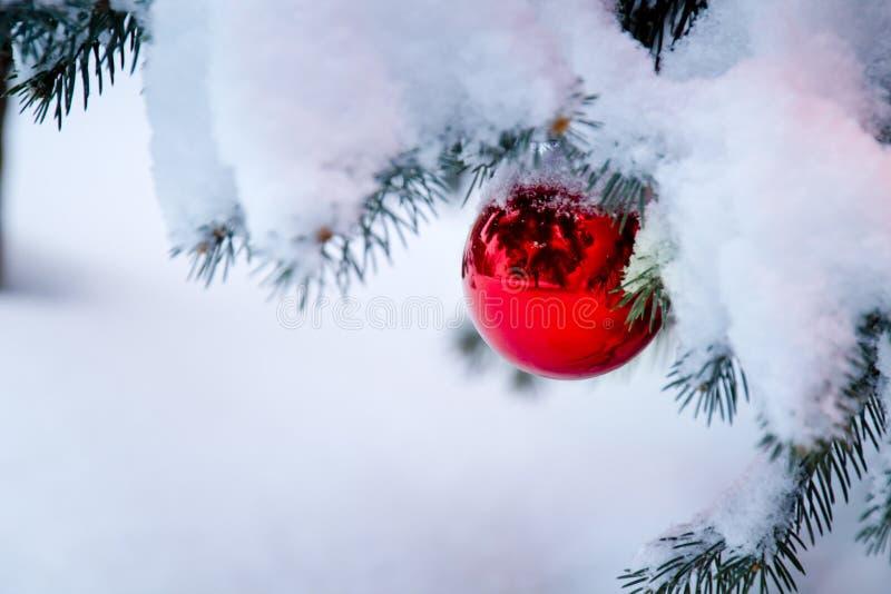 Ornamento vermelho brilhante que pendura de um ramo de árvore coberto de neve do Natal imagem de stock royalty free