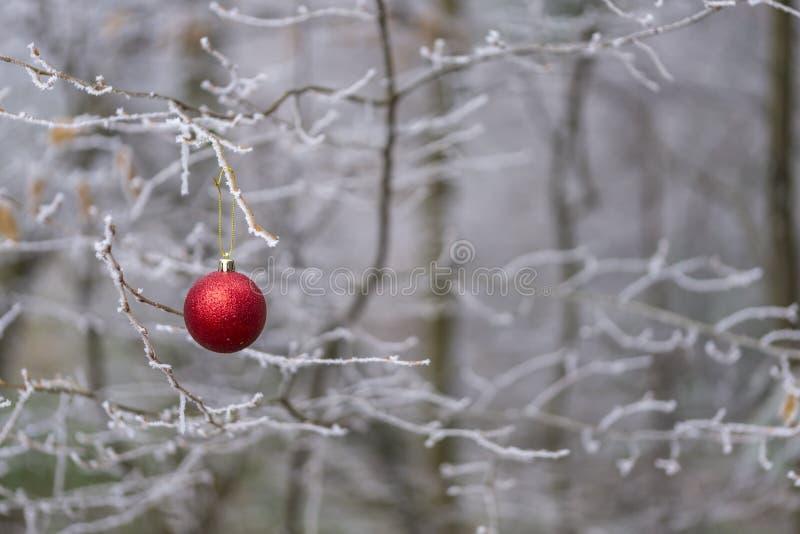 Ornamento vermelho da bola do Natal que pendura em um ramo de árvore do inverno foto de stock