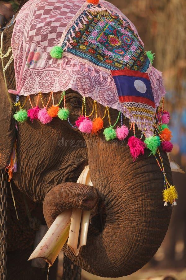 Ornate elephant eating royalty free stock photos