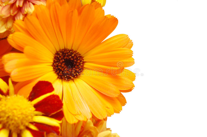 Ornement de belles fleurs d'été images libres de droits
