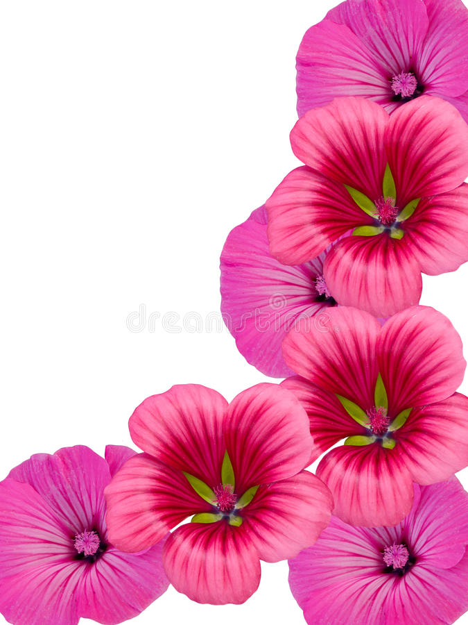 Ornement de fleur images libres de droits