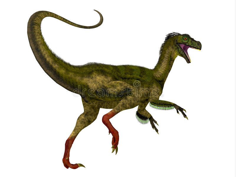 Ornitholestes Dinosaur Tail. Ornitholestes was a small carnivorous dinosaur that lived in the Jurassic Period of Western Laurasia which is now North America vector illustration