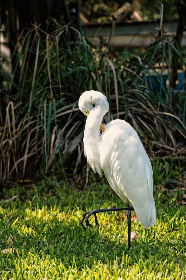Ornithologie en vrijheidsconcept stock foto's