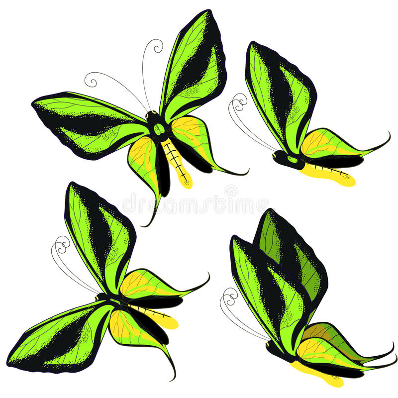 Ornithoptera paradisea, butterfly wings of a bird of paradise. v. Set Ornithoptera paradisea, butterfly wings of a bird of paradise vector illustration vector illustration