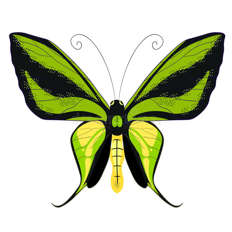 Ornithoptera paradisea, butterfly wings of a bird of paradise. v. Ornithoptera paradisea, butterfly wings of a bird of paradise vector illustration royalty free illustration