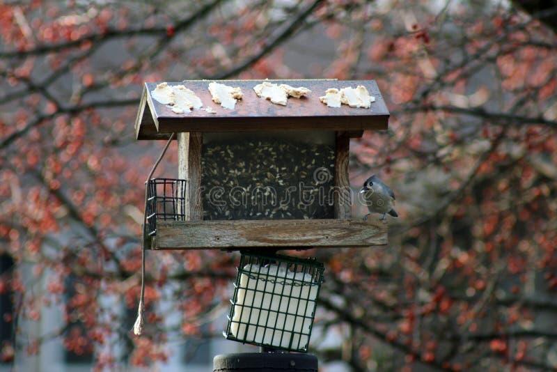 Ornitologia imagem de stock royalty free