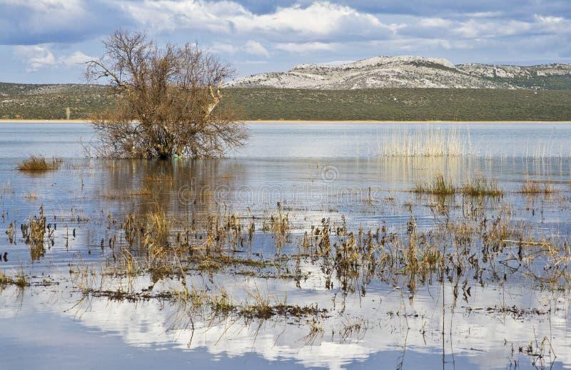 Ornitologisk reserv Vransko jezero croatia royaltyfri foto