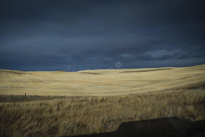 Oro coloreado por los campos de trigo del sol en Canadá fotografía de archivo
