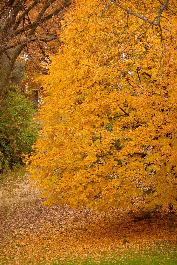 Oro del otoño fotografía de archivo