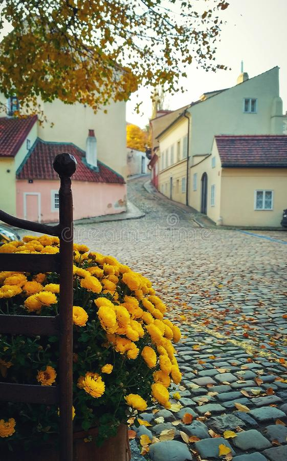Oro dell'autunno immagine stock