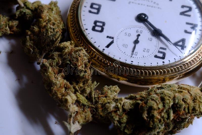 Orologio da tasca di Bud With della cannabis che visualizza 4:20 immagini stock libere da diritti