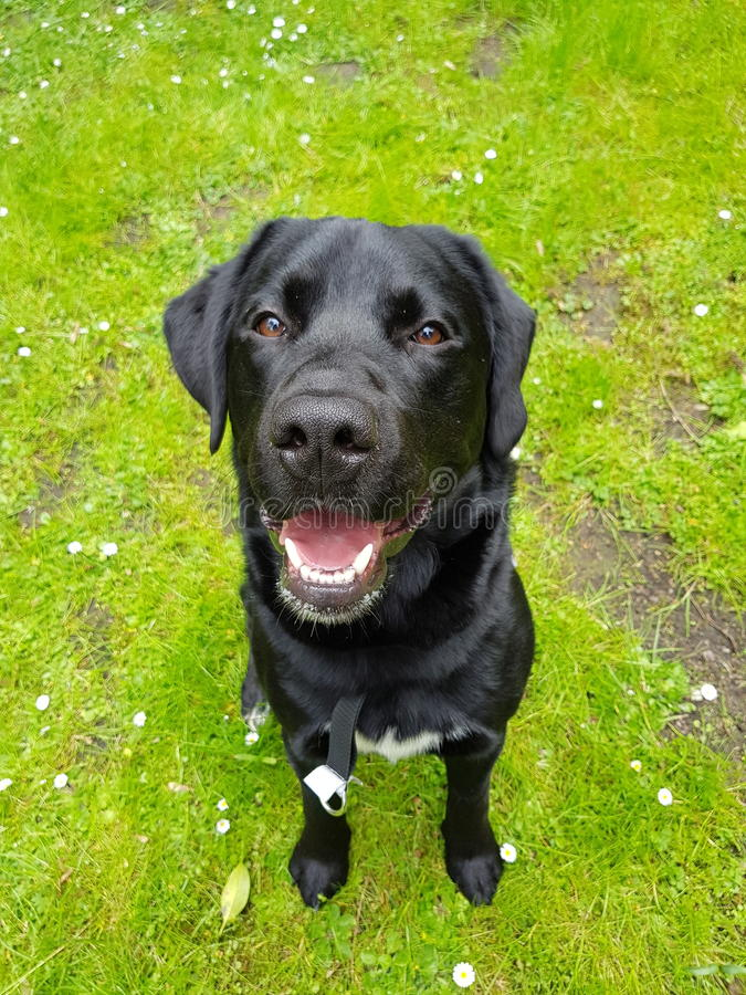Orologio del cane fotografie stock libere da diritti
