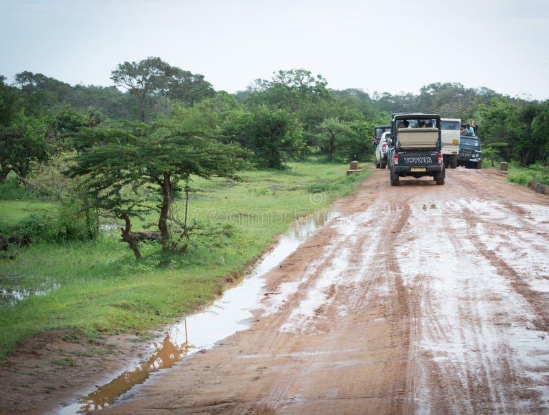 Orologio del leopardo immagini stock libere da diritti