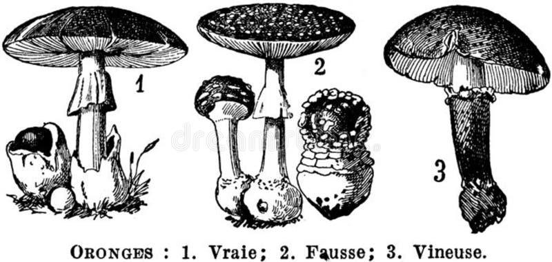 Oronges Free Public Domain Cc0 Image