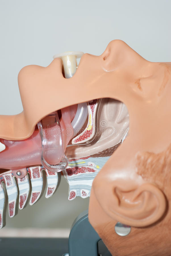 Oropharyngeal tube in Airway stock images