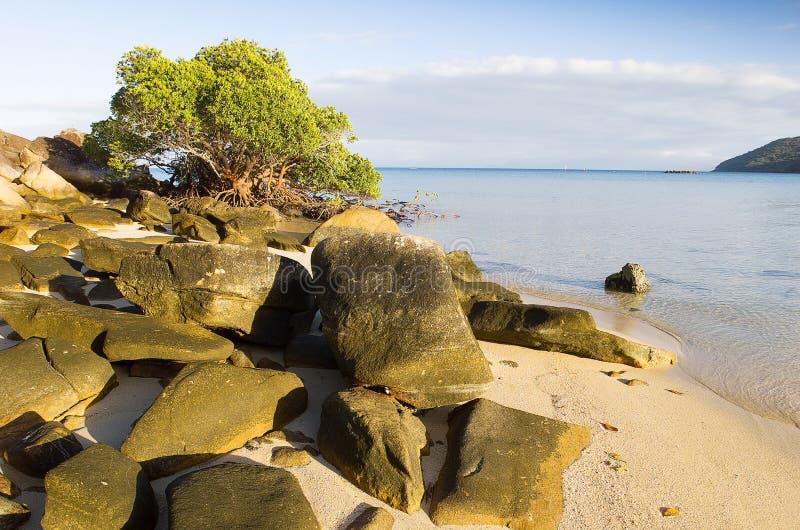 Orpheus Island stockbilder