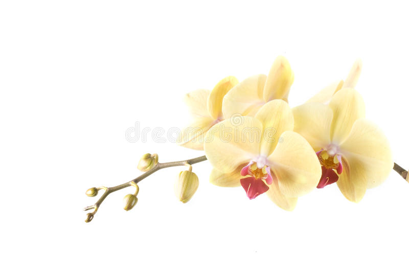 Orquídea fotos de stock royalty free