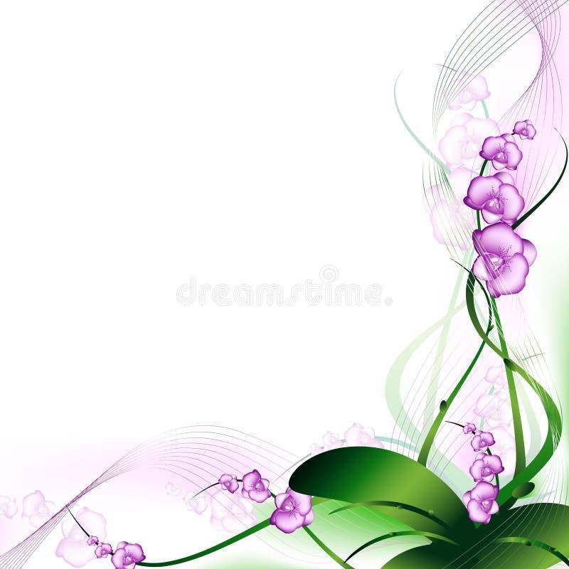 Orquídea ilustração stock