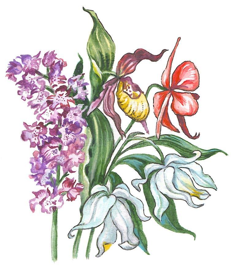 Orquídea stock de ilustración