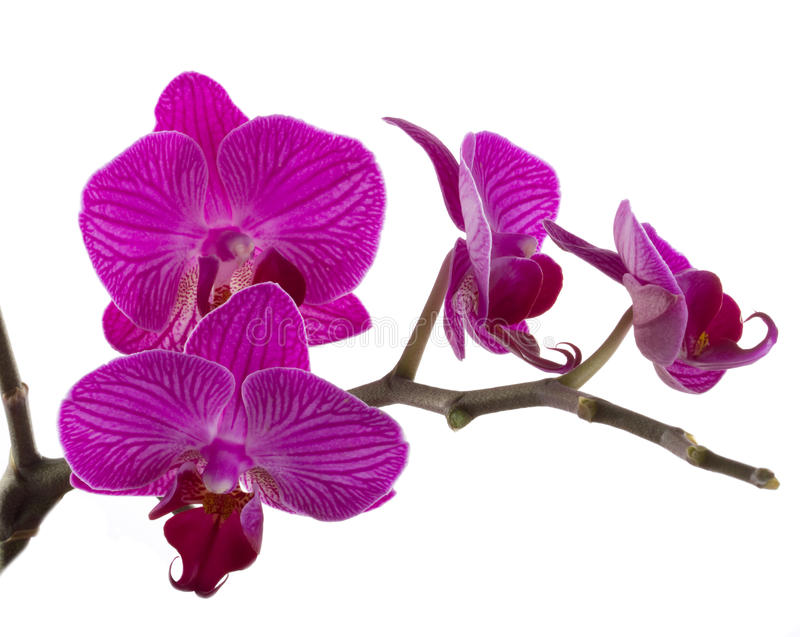 Orquídea fotos de stock