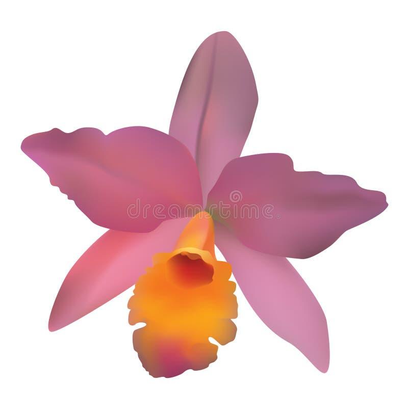 Orquídea. ilustración del vector