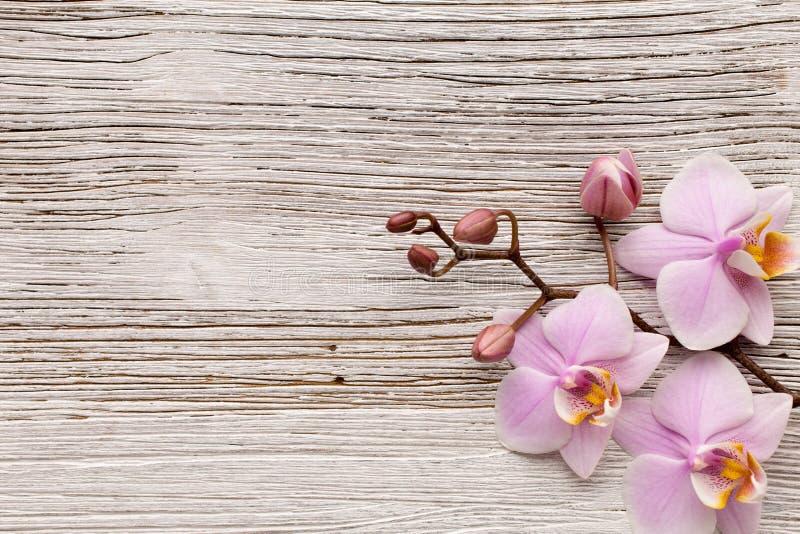 Orquídea. imagen de archivo libre de regalías
