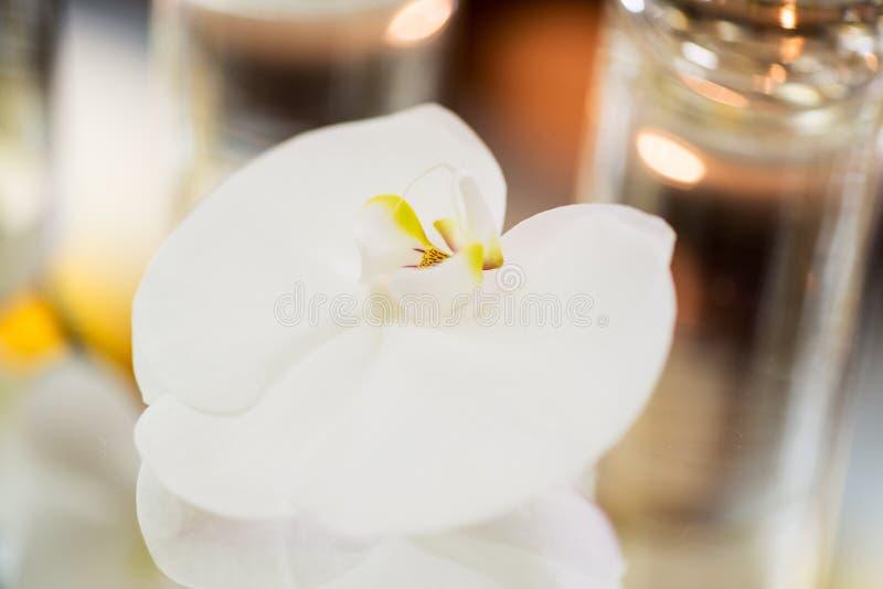 Download Orquídea foto de archivo. Imagen de orquídea, cierre - 42436898