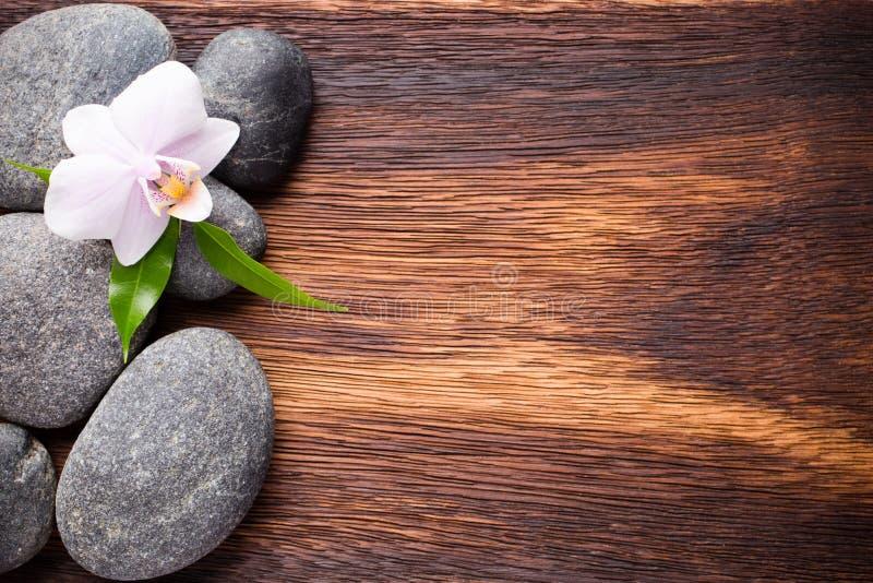 Download Orquídea foto de archivo. Imagen de piedras, sano, belleza - 42446472