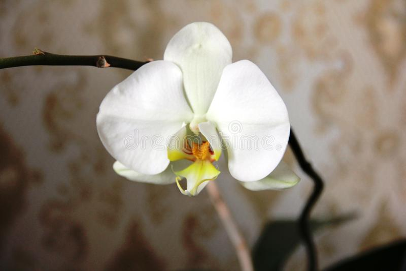 Orquídea fotos de archivo libres de regalías