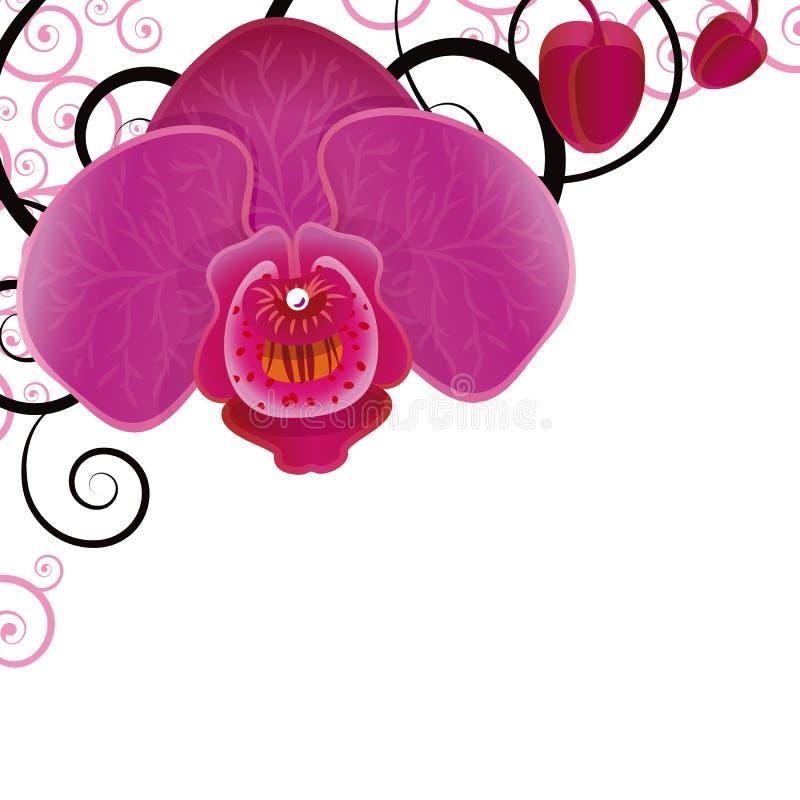Orquídea libre illustration