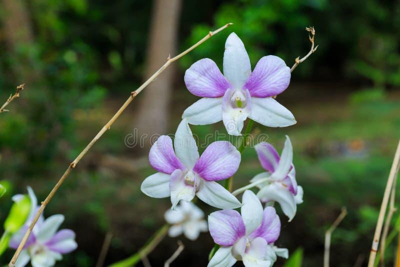 Orquídea blanca en fondo salvaje fotos de archivo