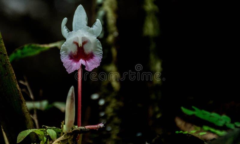 Orquídea blanca hermosa fotografía de archivo