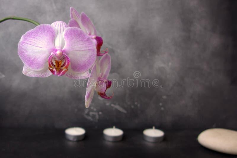 Orquídea blanca y rosada, piedra del balneario, y tres velas en fondo gris imagen de archivo libre de regalías