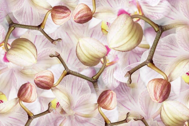 orquídea Blanco-violeta-rosada de los brotes Fondo de las orquídeas de las flores Composición de la flor un collage de flores ber foto de archivo libre de regalías