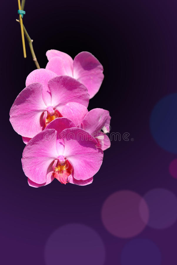 Orquídea blanda fotos de archivo