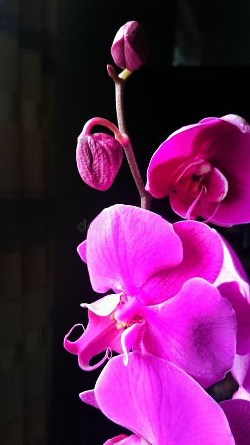 Orquídea bonita foto de stock