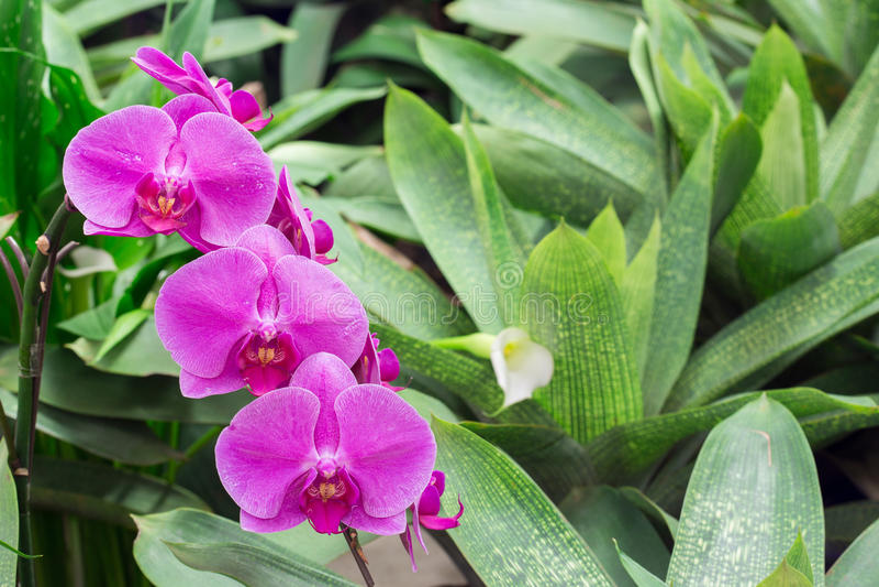 Orquídea bonita no jardim imagem de stock royalty free