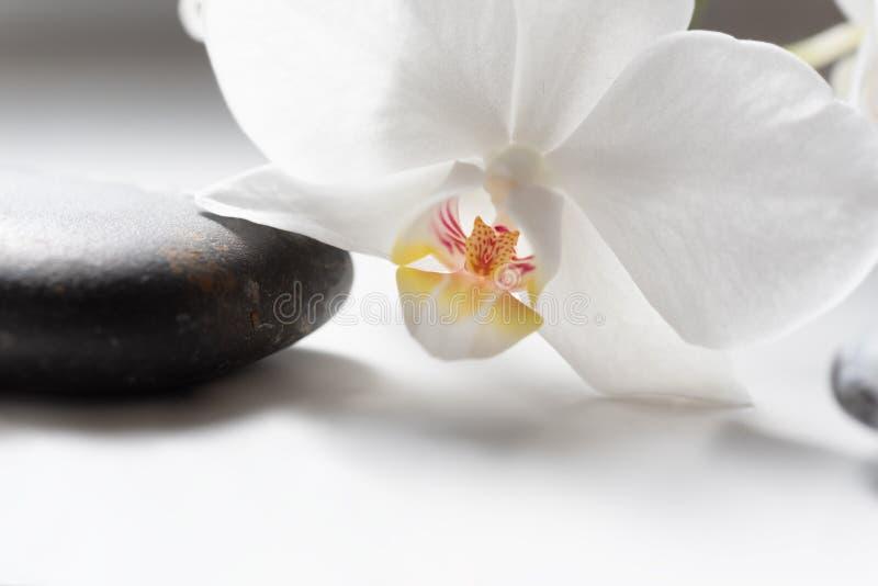Orquídea branca e pedra preta do seixo fotografia de stock