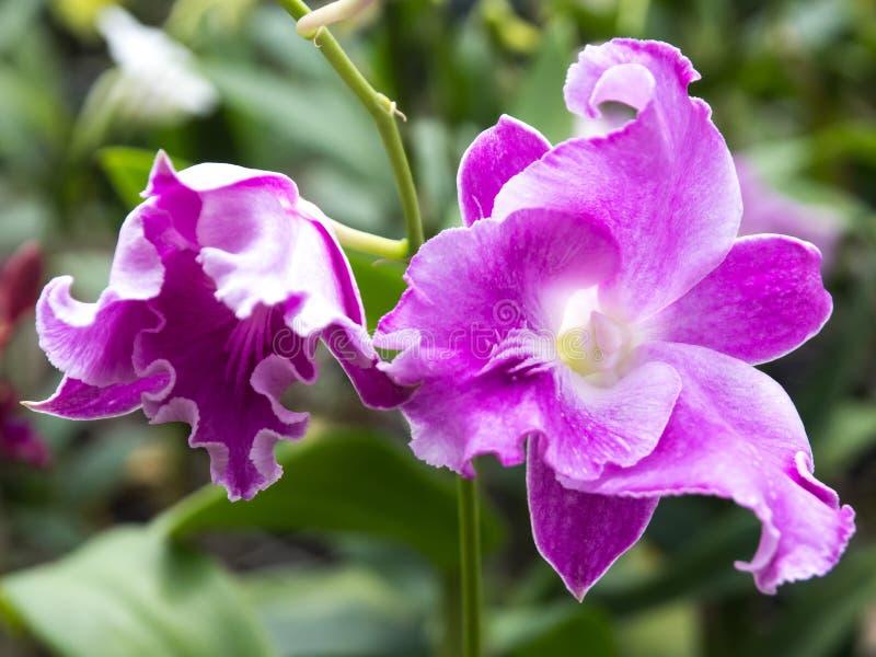 Orquídea branca em um potenciômetro no jardim fotos de stock royalty free