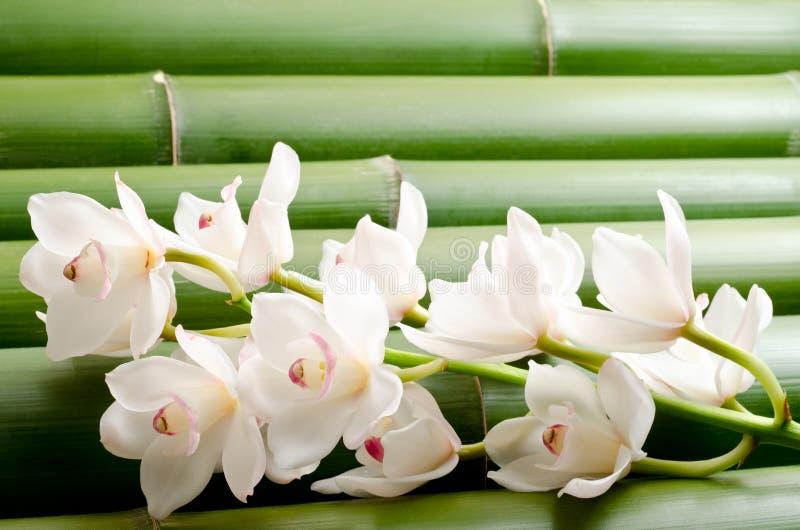 Orquídea branca no bambu fotos de stock royalty free