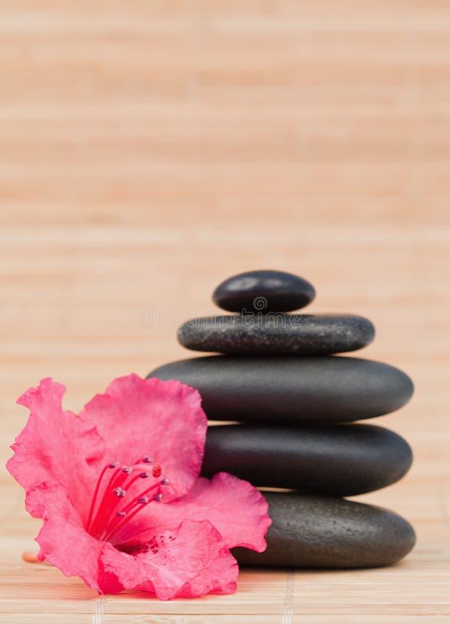 Orquídea cor-de-rosa ao lado de uma pilha preta das pedras imagem de stock