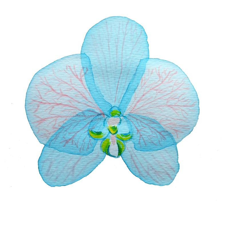 Orquídea cor-de-rosa mergulhada transparente azul da flor da aquarela no fundo branco ilustração do vetor