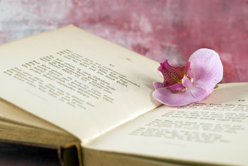 Orquídea cor-de-rosa no livro velho fotos de stock