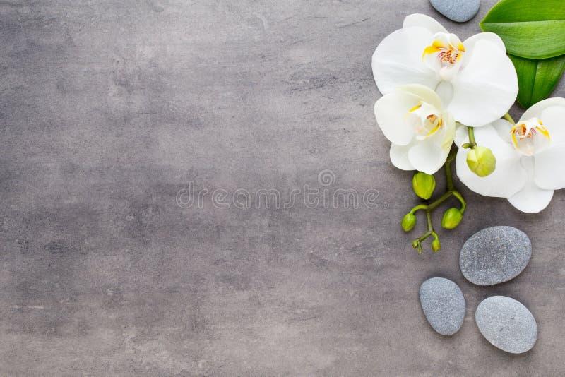 Orquídea de la belleza en un fondo gris Escena del balneario foto de archivo